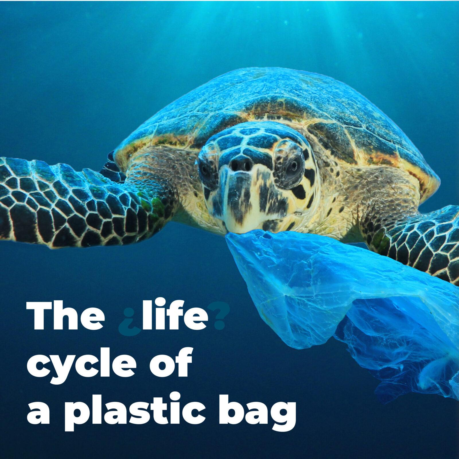 The life cycle of a plastic bag